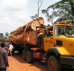 Commercial logging in Cameroon and elsewhere has threatened forest-dwelling animals with habitat loss
