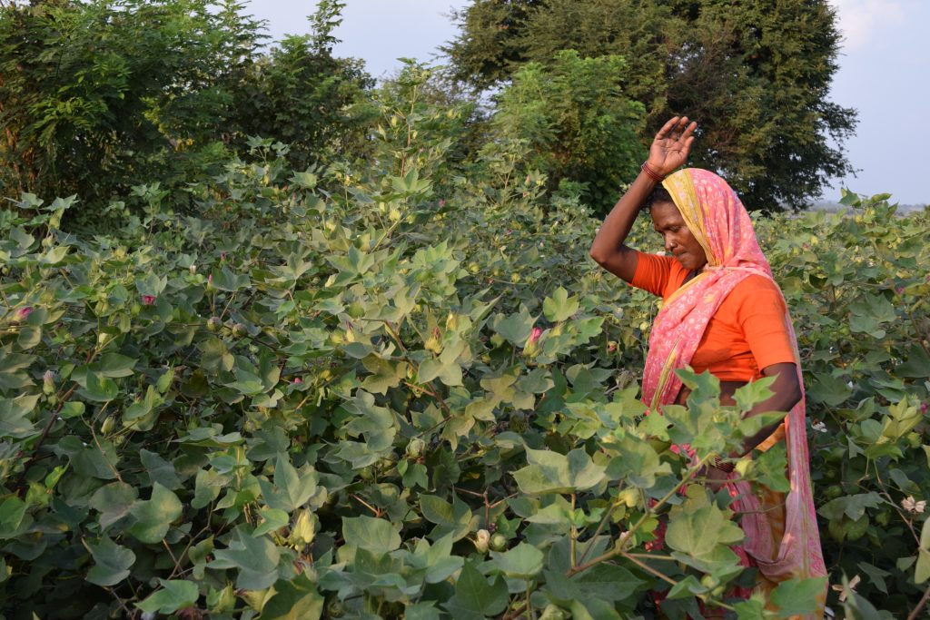 Sandhya Mohite, a marginal cotton farmer in Maharashtra state's suicide-affected Yavatmal region. Cotton is one of the crops where Minimum Support Prices (MSPs) system has worked but now, according to the country's new farm laws, farmers will be no longer guaranteed a minimum price on produce. Credit: Stella Paul/IPS