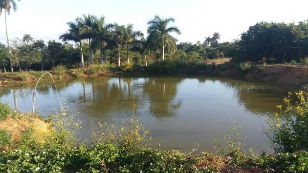 This is the largest pond dug on the Finca Marta farm for rainwater harvesting, part of the sustainable solutions used to turn a sloping, relatively infertile piece of land without water into a productive farm in the west-central Cuban province of Artemisa, which has now become a model for other farmers. CREDIT: Courtesy of Fernando Funes
