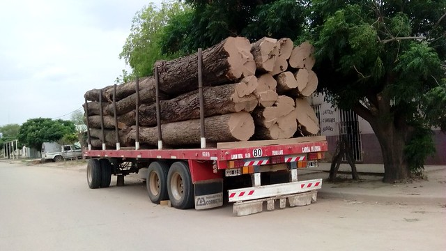 A truck carries freshly cut native tree trunks in the town of Miraflores, in the northeast Argentine province of Chaco. Forests are an important resource in one of the poorest regions of the country, and part of the wood extracted comes from the clearing of land by agricultural producers. CREDIT: Daniel Gutman /IPS