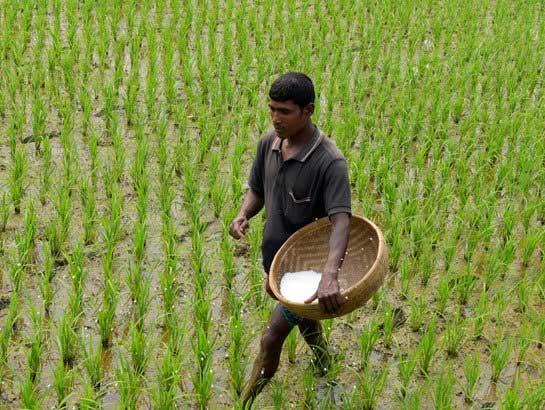 Bangladesh Welcomes a New High Yielding Biofortified Zinc Rice