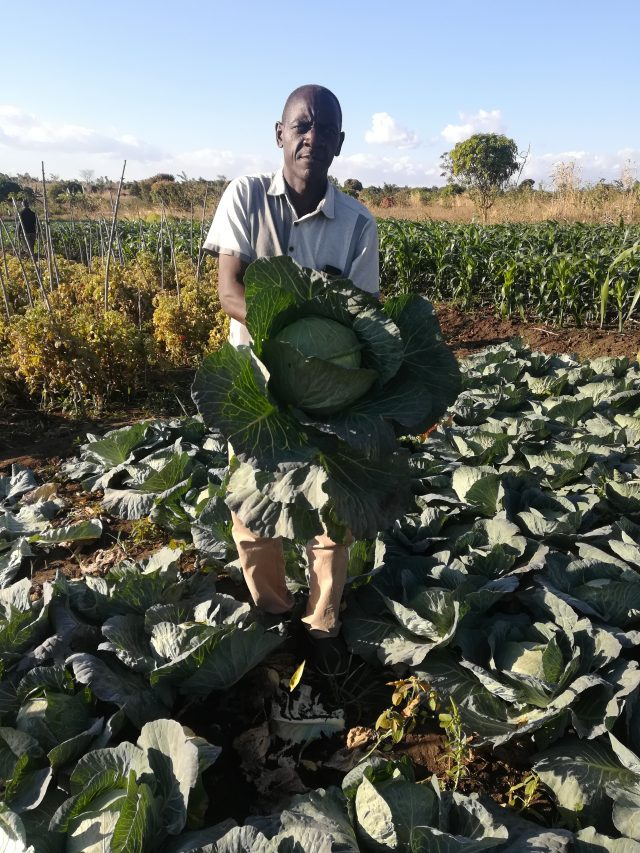 Feston Zale from Chileka area in Blantyre district of Malawi's Southern Region has changed the wetland he inherited from his parents into a horticultural farm. He is pictured here withsome of his prize-winning cabbages. Credit: Esmie Komwa Eneya/IPS