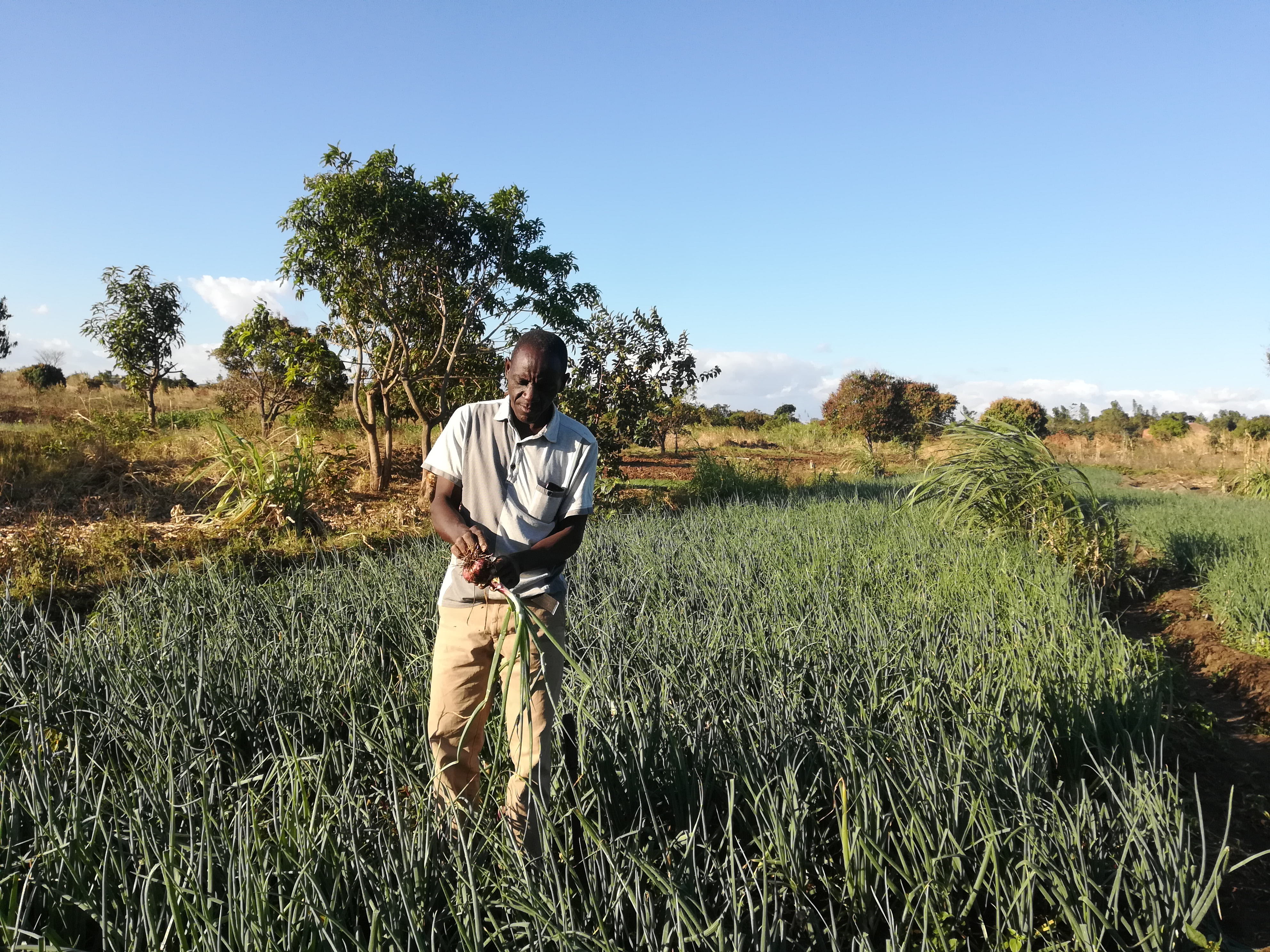 Malawian Youth Wipe Away Unemployment Tears with Agribusiness