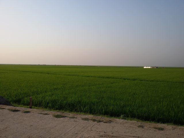 A rice paddy in the haor region of Bangladesh. Benefit sharing goes beyond the mere sharing of water resources. It includes equitably dividing the goods, products and services connected to the watercourse. Credit: Rafiqul Islam/IPS