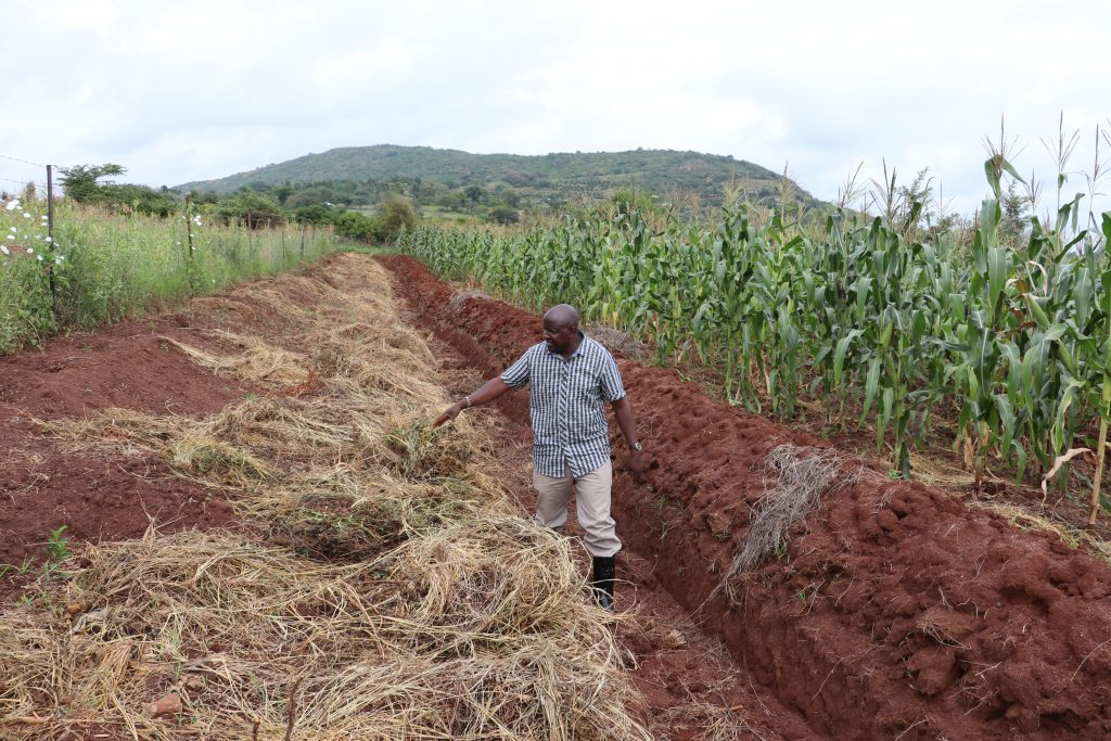 With regenerative agriculture, weeds are used to form part of the soil. Farmer Justus Kimeu produced a bumper maize harvest during a very dry season using this farming technique. Credit: Isaiah Esipisu/IPS