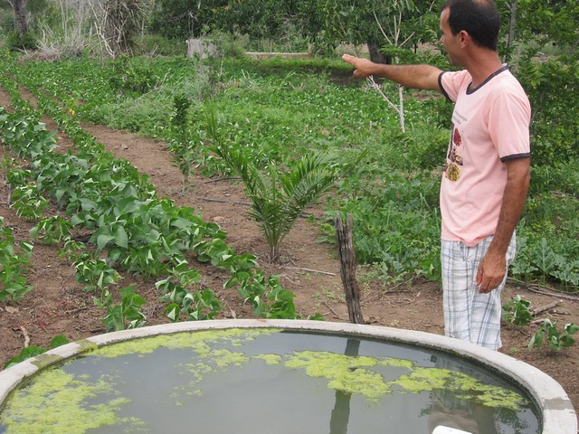 Abel Manto has managed to grow vegetables and fruit trees on his farm in the interior of the state of Bahia, in Brazil's Northeast region, in an orchard in the semi-arid ecoregion, thanks to rainwater collected and stored in tanks. With no nearby streams, the farm's year-round production depends on rainwater harvesting. CREDIT: Mario Osava/IPS